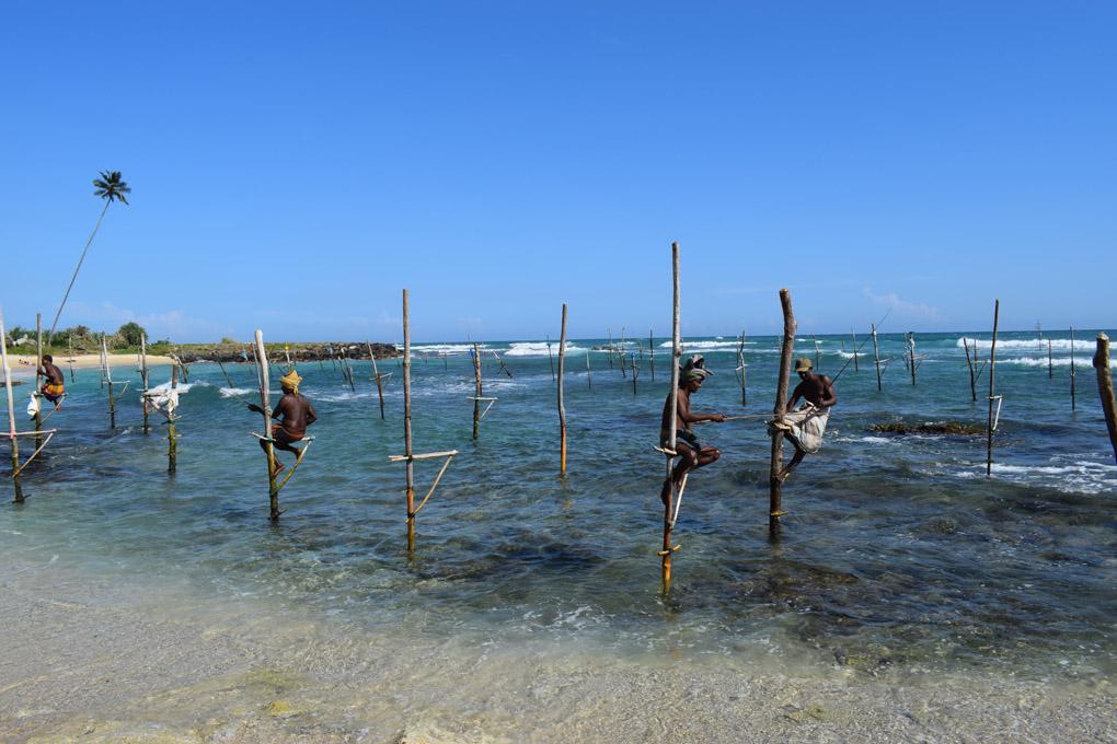 Sri Lanka; Weligama; Stilt Fishermen