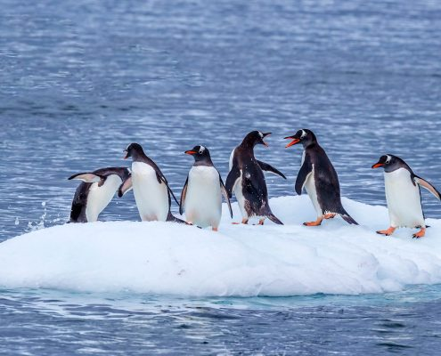 Antarctica, luxury cruising, Abercrombie and Kent