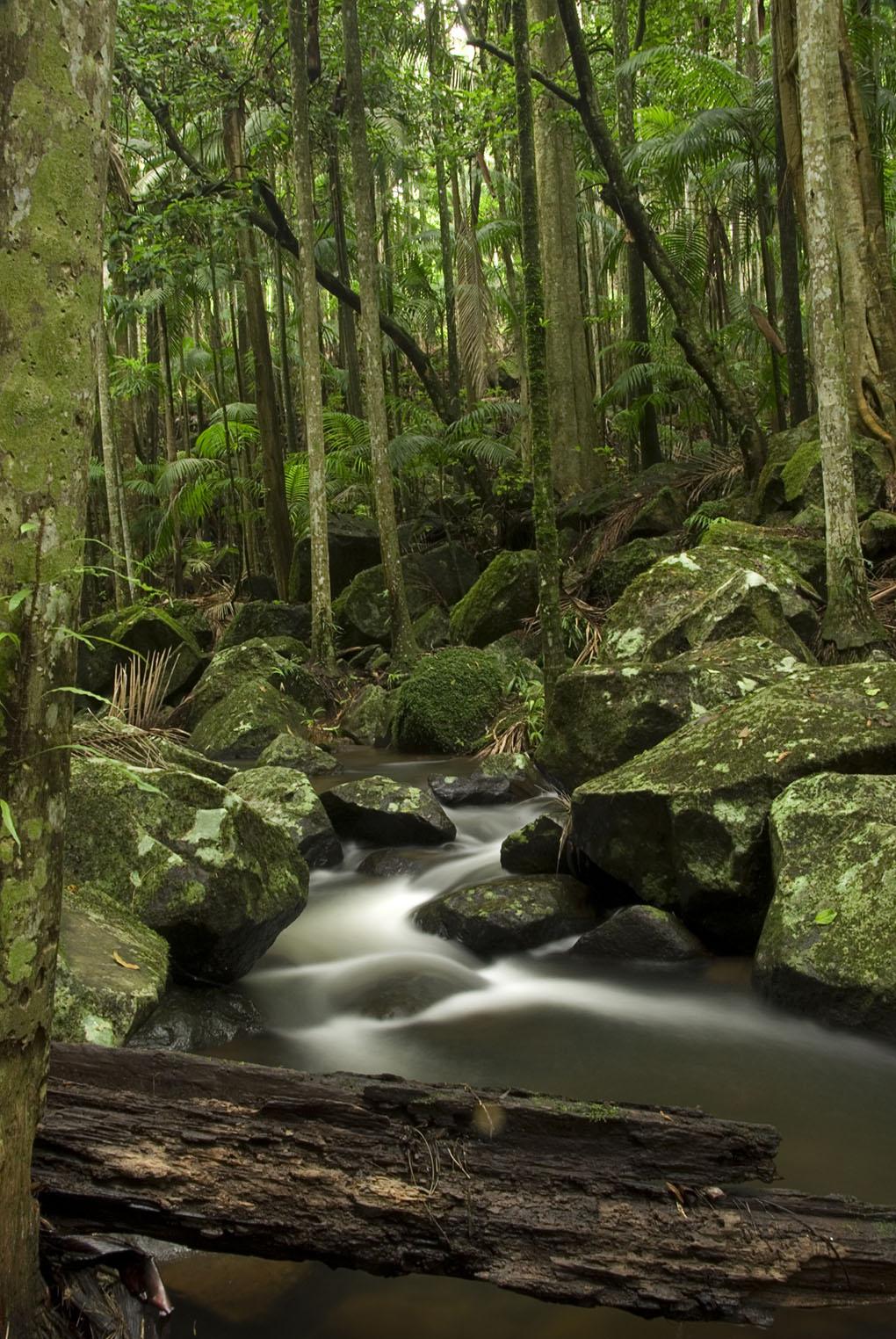 Tamborine National Park, creek, rainforest, Danielle Lancaster